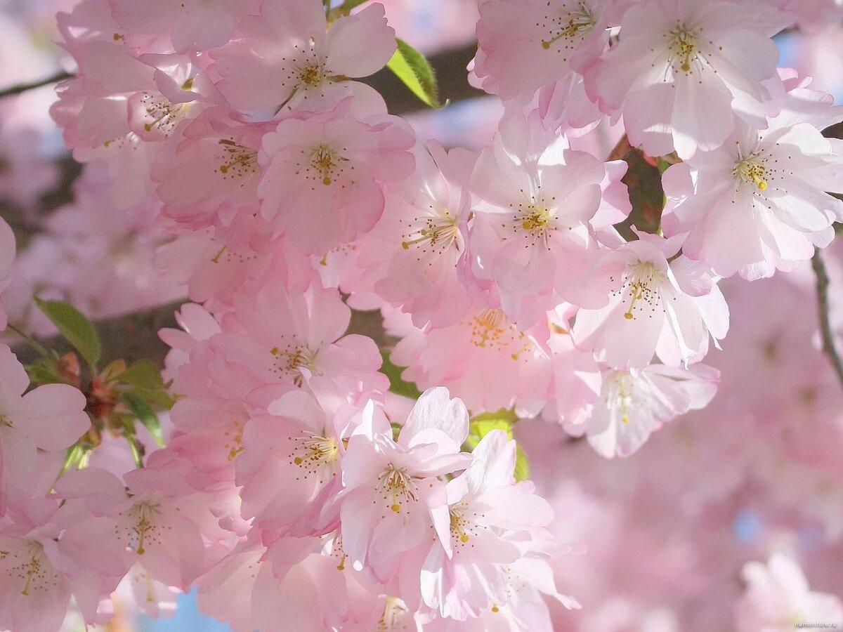 Для, красивая весна картинки на рабочий стол хорошего качества