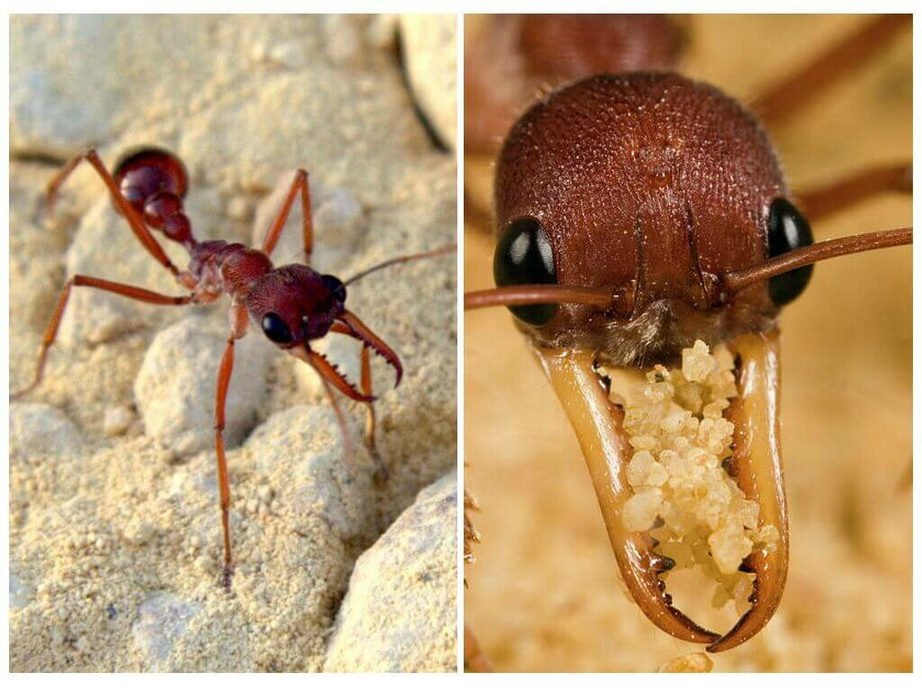 виды муравьев на картинке сентябре