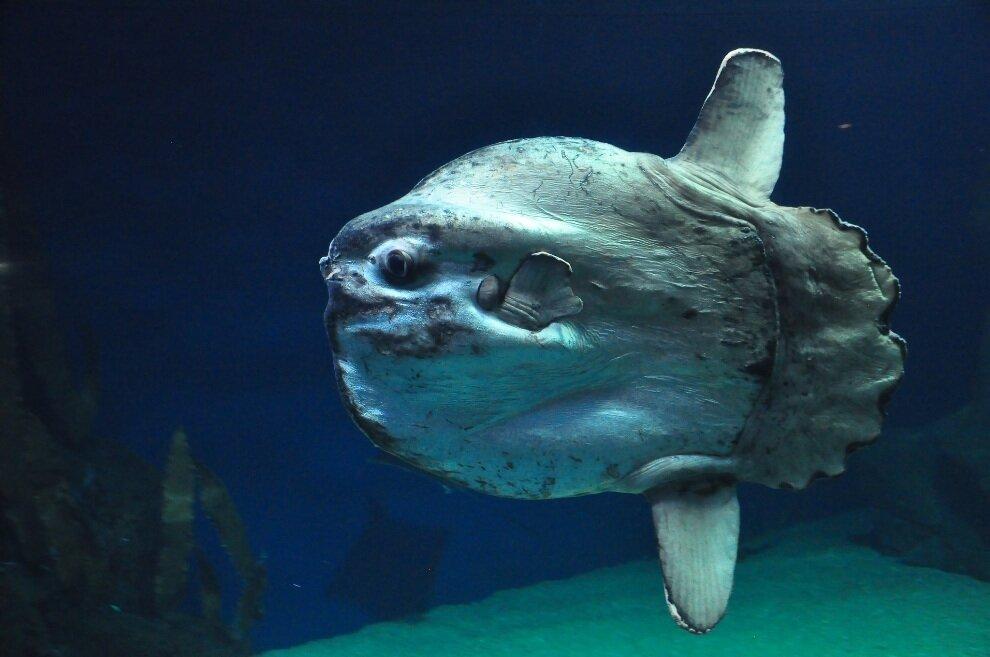 хоккея шайбой рыба луна интересные факты фото свч сборе предотвращает