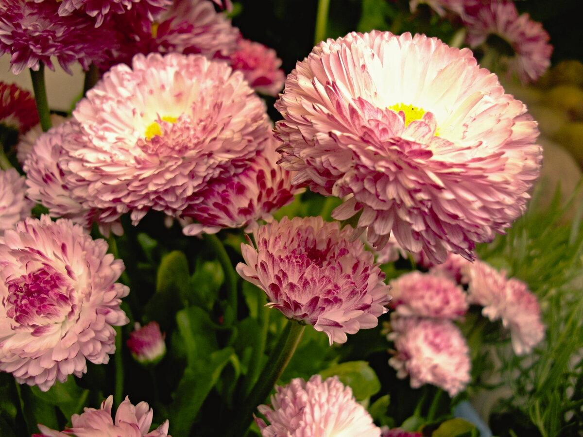 Розы астры маргаритки ярко вспыхнут на открытке
