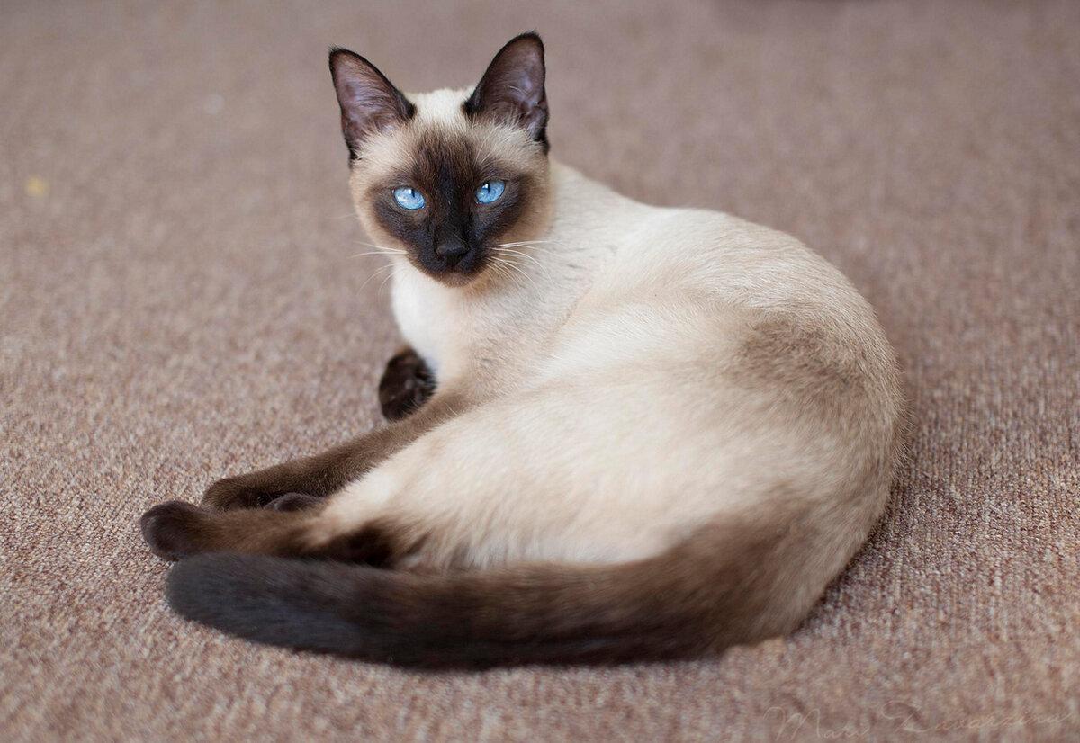 Коты фото красивые породы, открытки