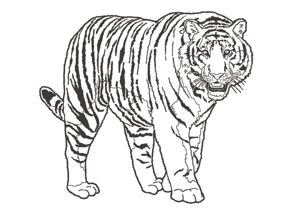 Картинка с тигром раскраска