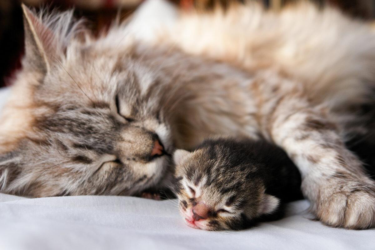 Лобовое стекло, картинка с кошкой и котятами