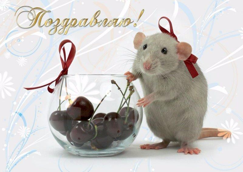 Открытки мышки на день рождения