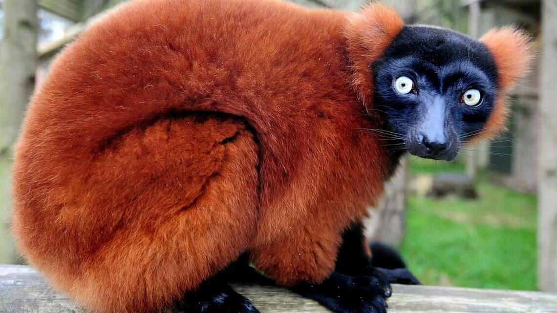 времена, животные красной книги всего мира фото вам понравилось данное