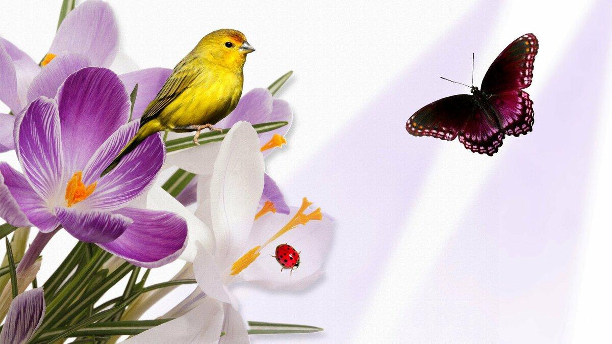 Картинки птицы бабочки