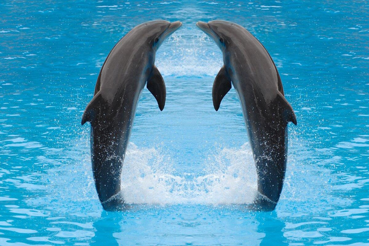 Открытка днем, дельфины фото красивые и смешные