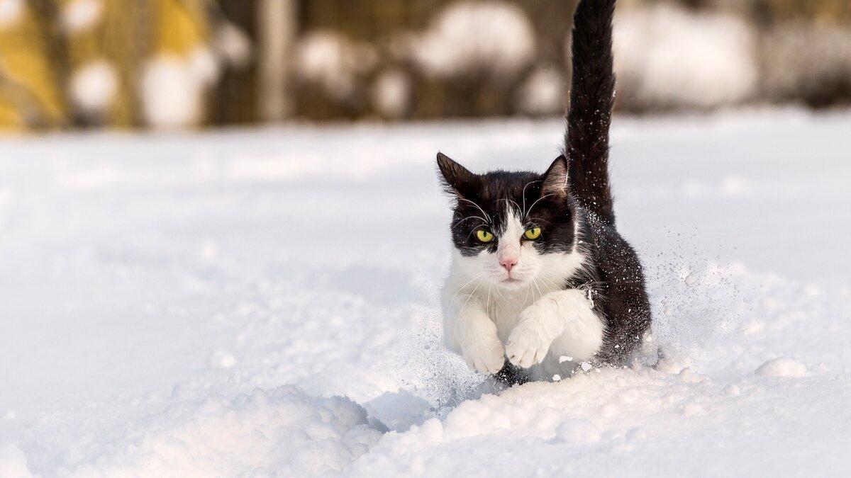 Картинки кошка зима