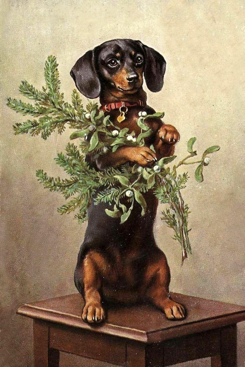 Старые открытки с собакой