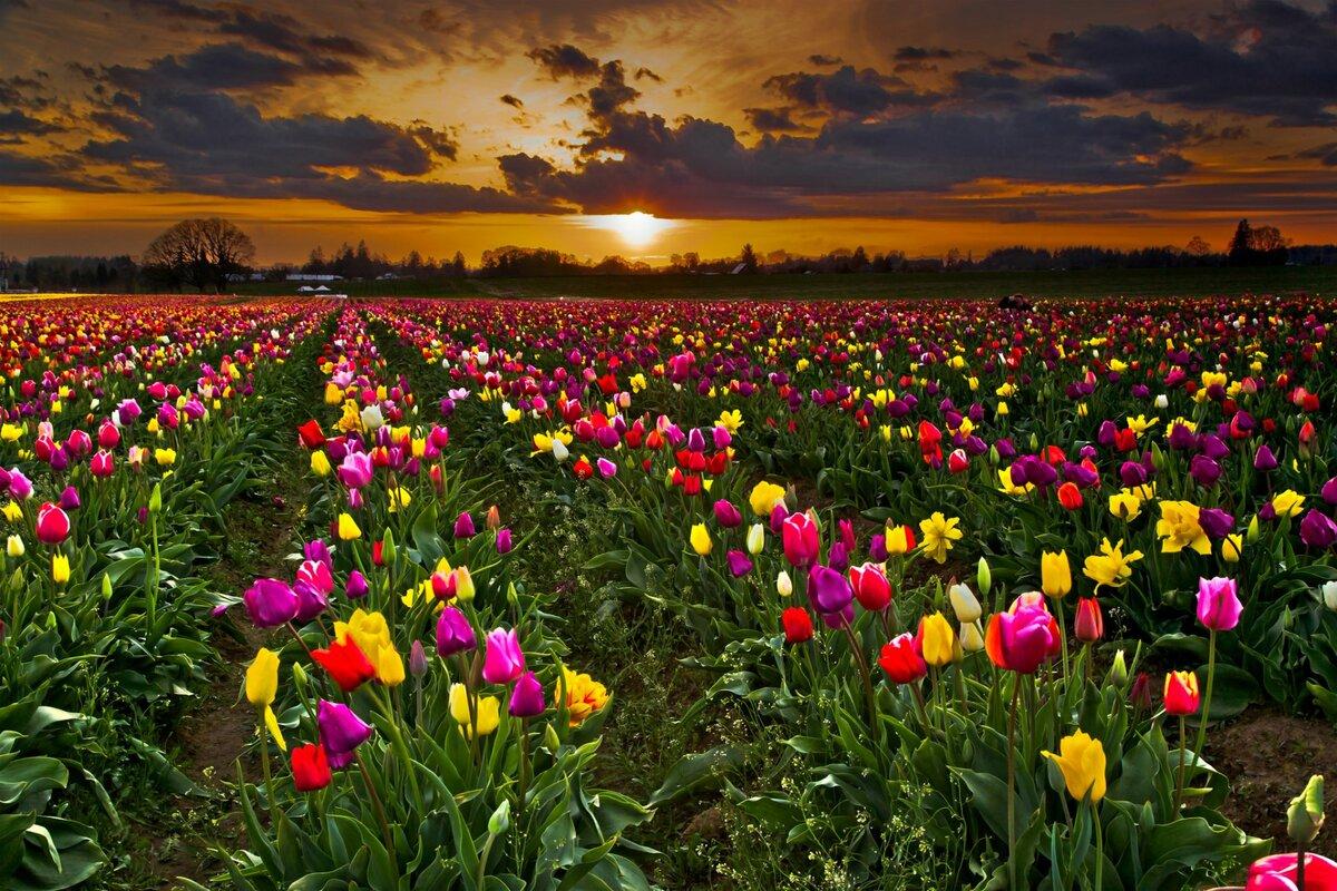 Музыкальные, открытки поля цветов
