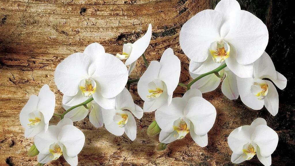 Цветы белая орхидея донецк купить
