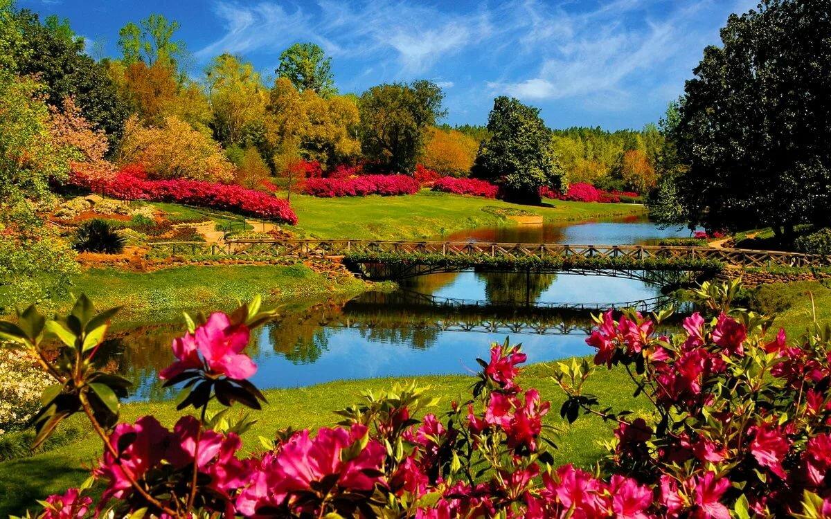 Картинки про природу и цветы, скучаю тебе прикольные