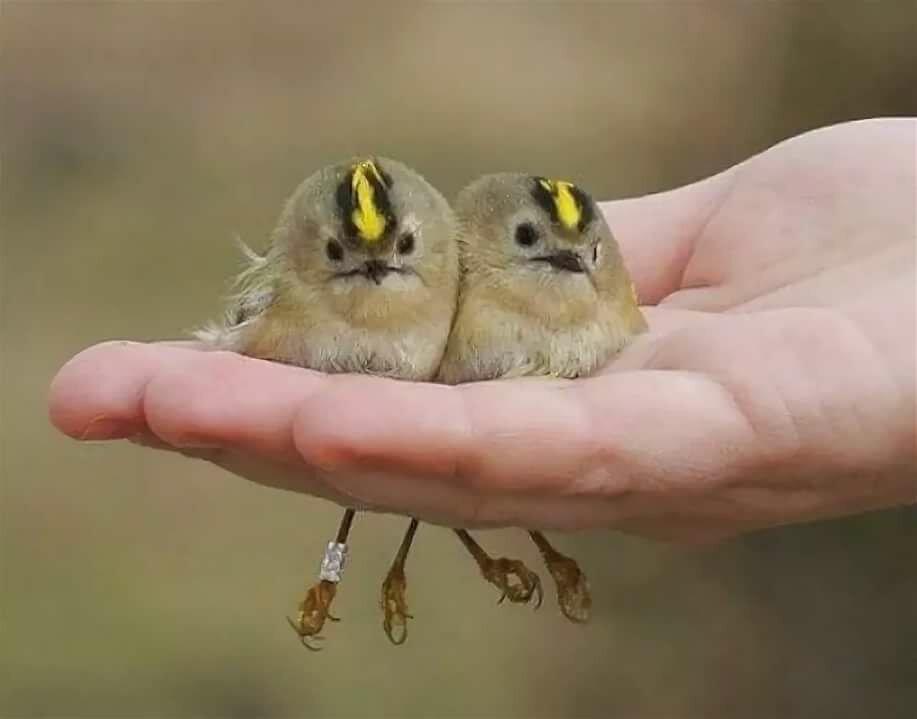 Открытки днем, картинки птички приколы