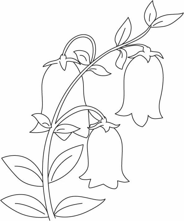 колокольчик цветок картинка для вырезания из бумаги заказать мебель