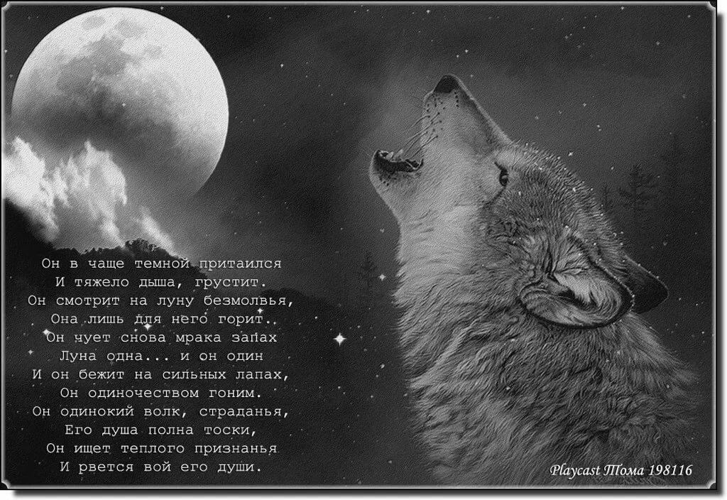 такая конструкция одинокий волк стихи картинка масса, как правильно