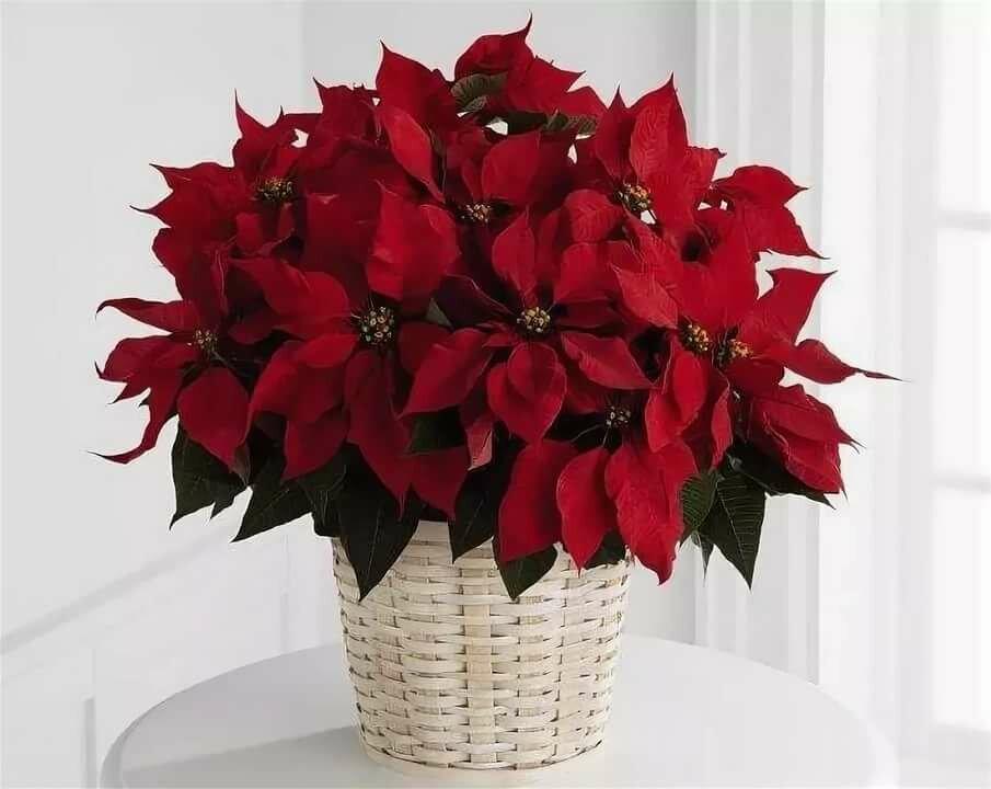 Доставка, цветы которые можно подарить зимой