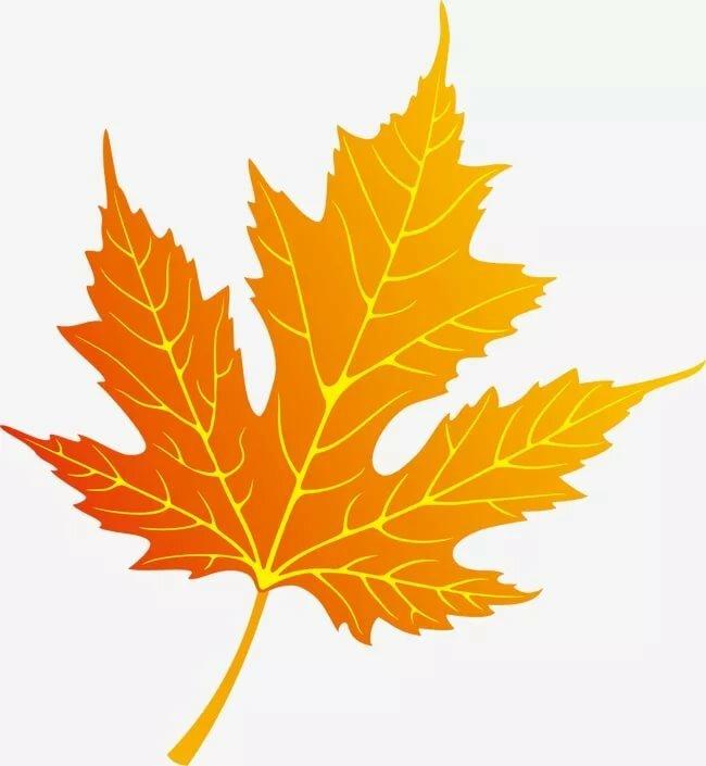 Листья осени картинки цветные, связисты