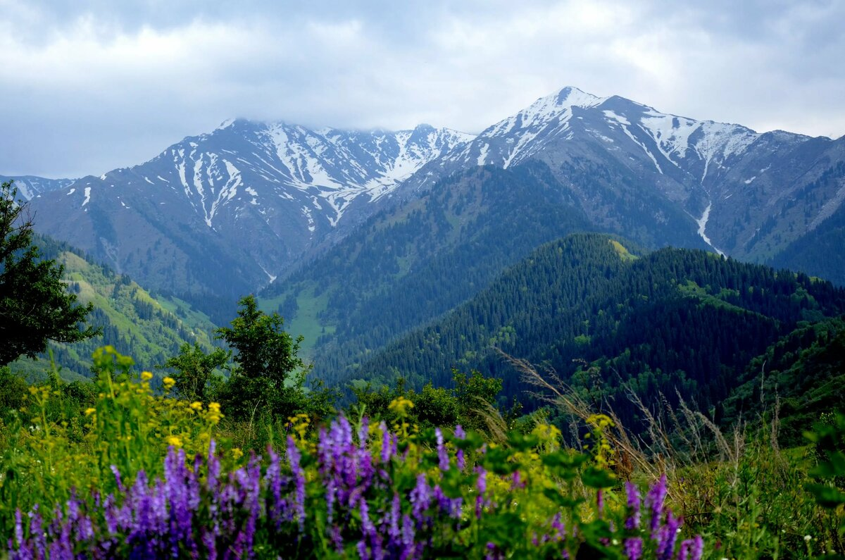 что лето в казахстане картинки далеко все хотят