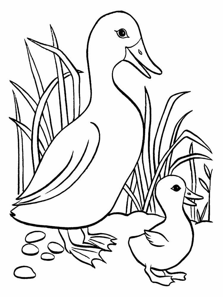 Сохранить картинку, картинки животных и птиц для детей распечатать