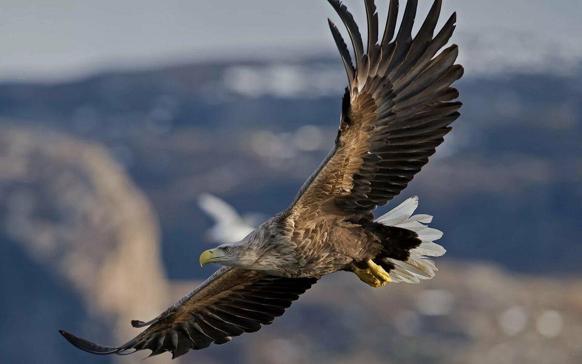 Фото птицы гнездящиеся на обрывистых берегах система