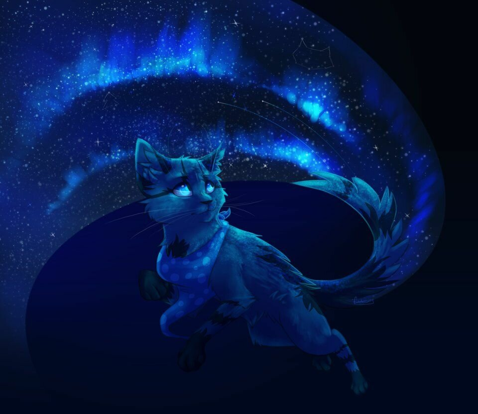Картинки коты-воители звездное племя