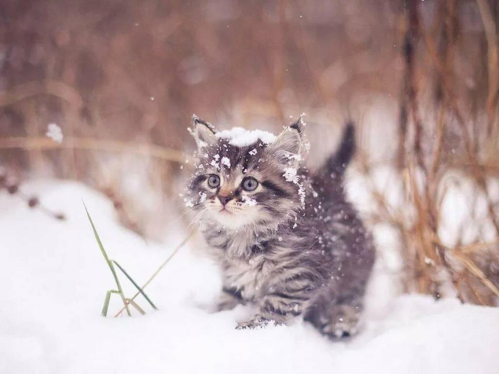 Котята в снегу картинки