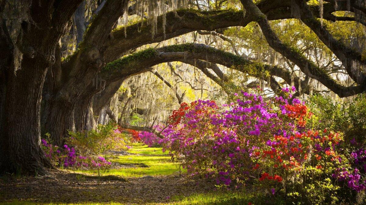 Красивые картинки цветов и природы, маме