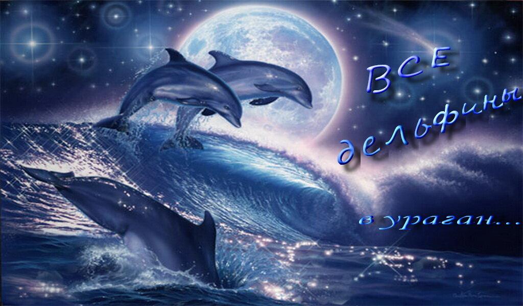Открытки с дельфинами, поделки красивые открытка