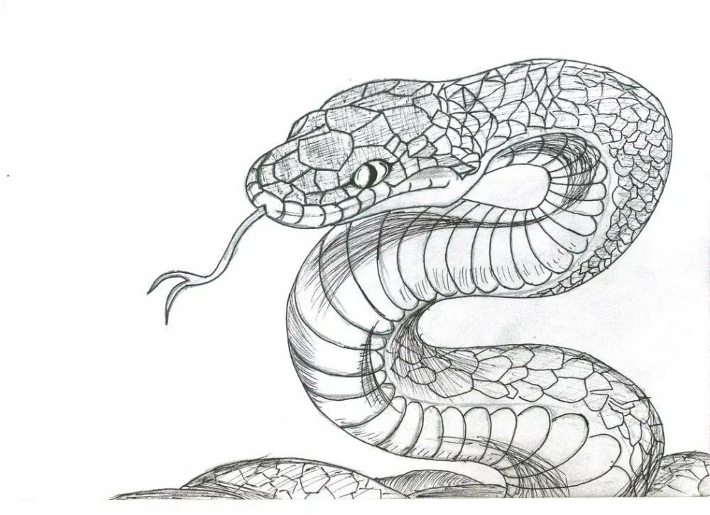 Змеи картинки красивые нарисованные, смешные