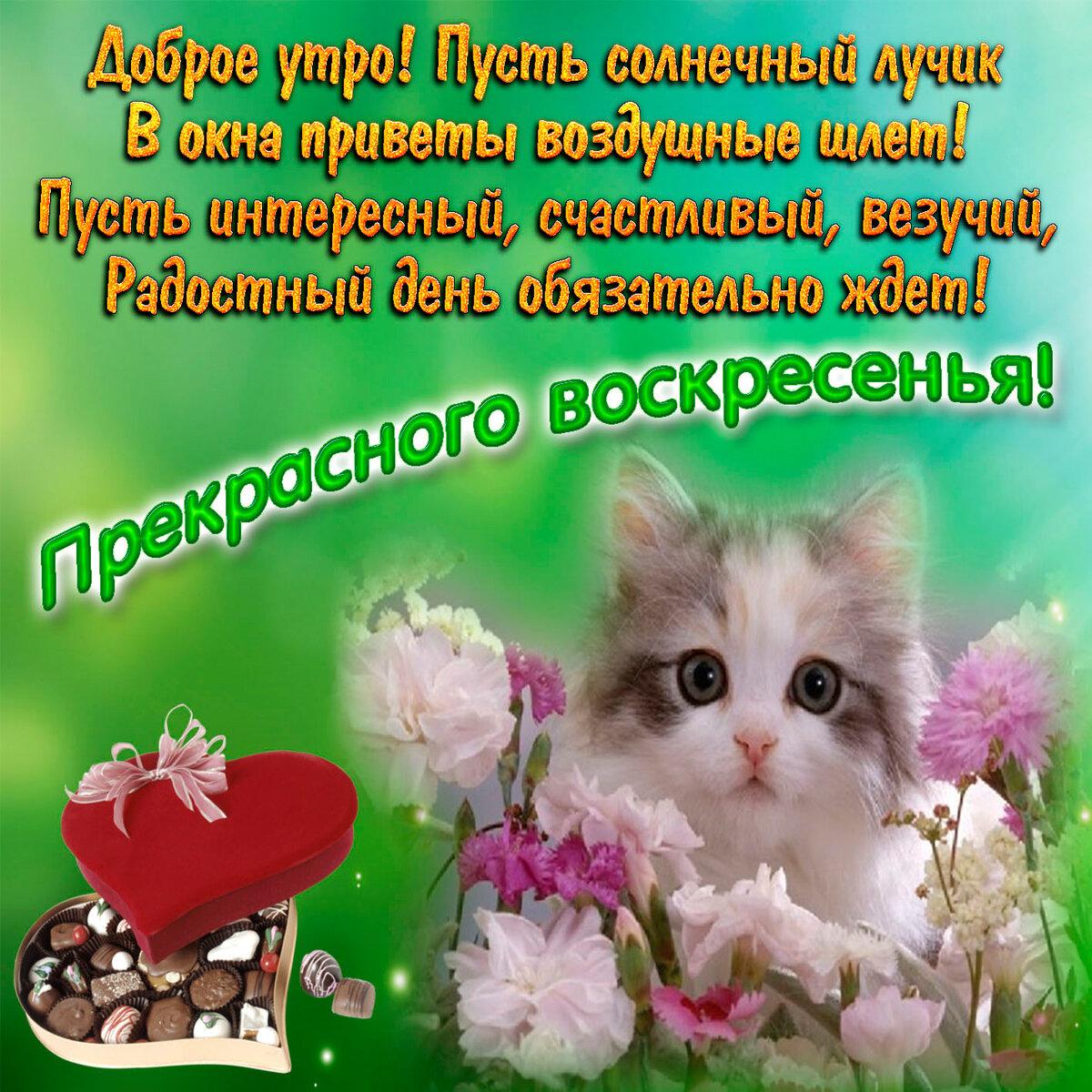 Доброе воскресное утро друзья картинки красивые, марта дорогая подружка