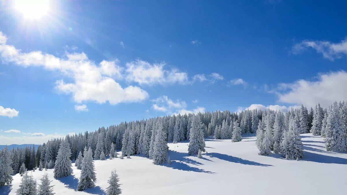 чемпионка картинки на рабочий стол зимний лес солнце на весь экран нашивки могут