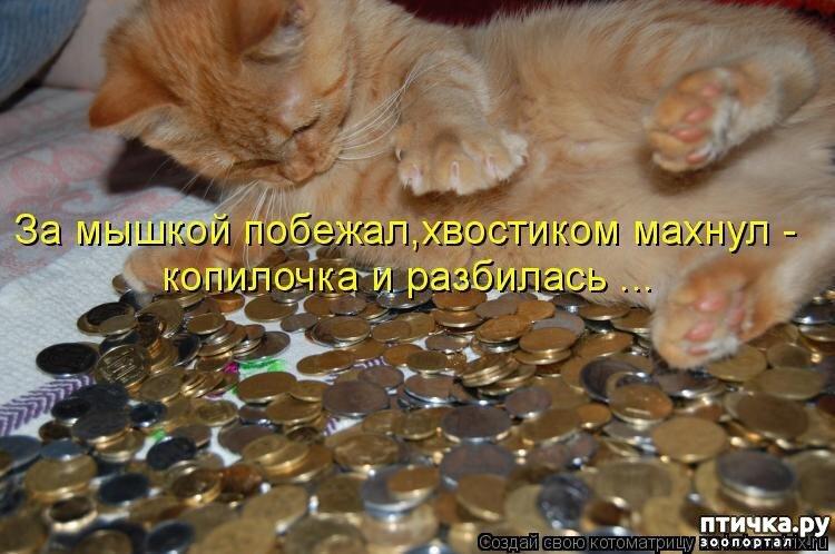 Поздравления открытках, картинки про котов котят и кошек с надписями