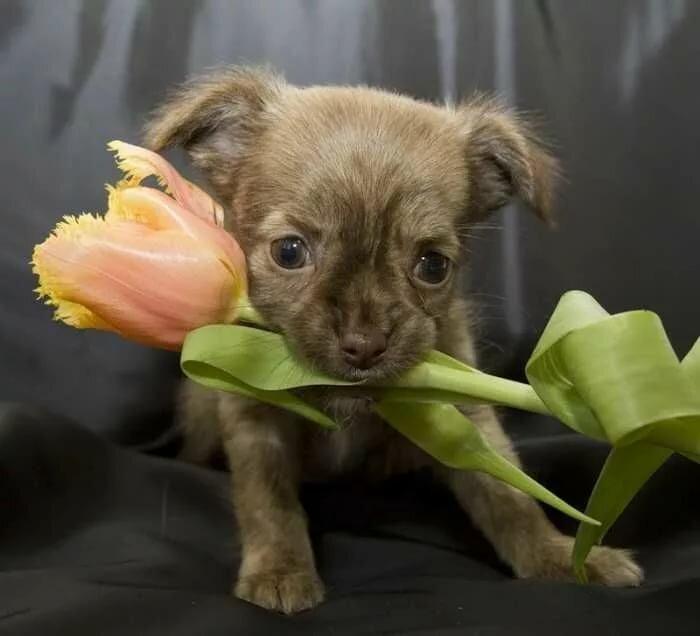 Картинки открытки, поздравительные открытки 8 марта с собакой