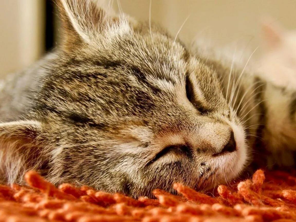 Сладких снов котик картинки с надписями