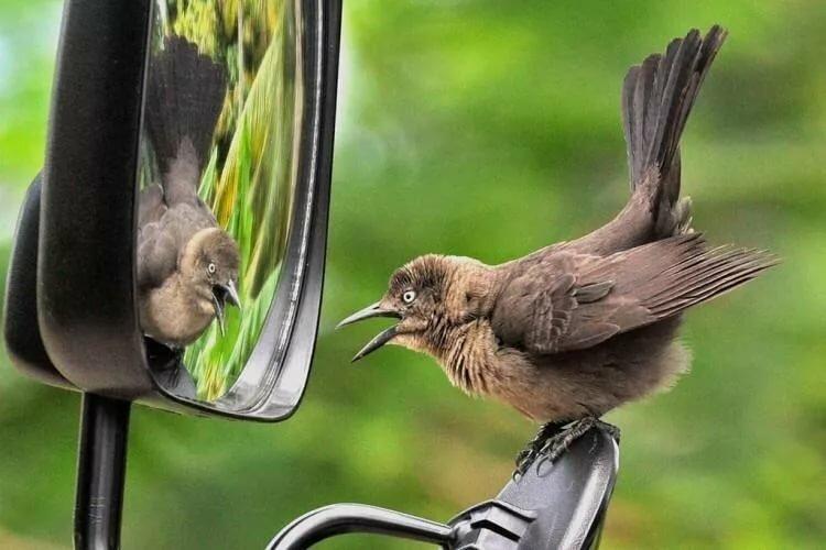 Приколы картинки птицы, нервничай все