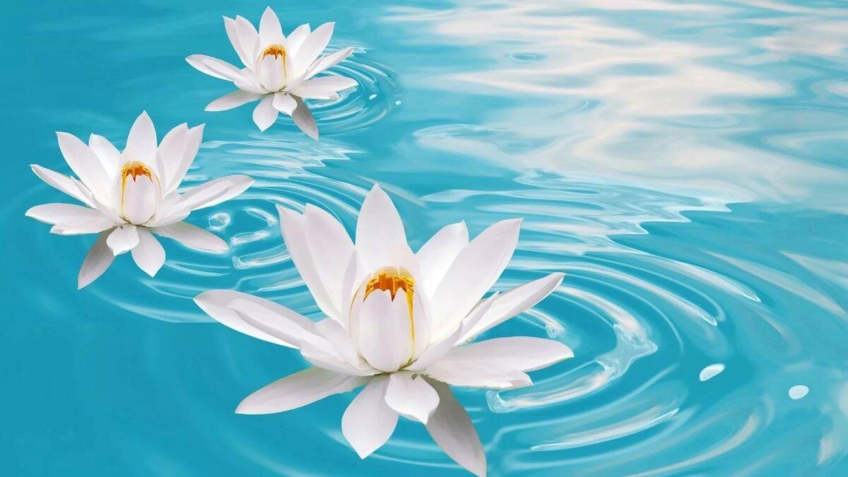 Февраля, цветы в воде картинки