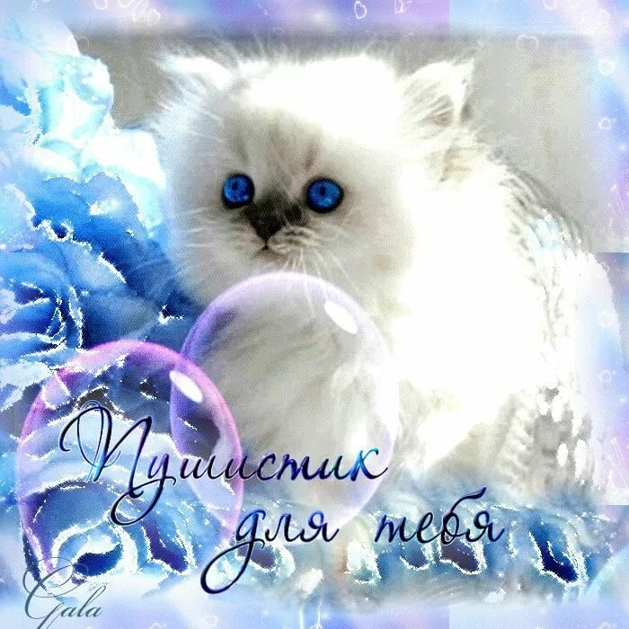 Открытки милому котенку