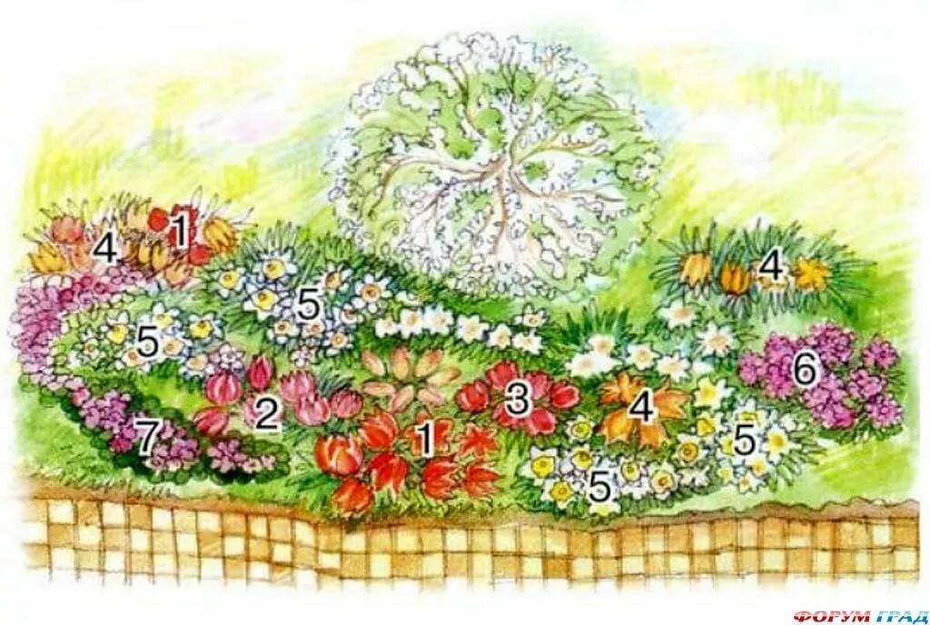 картинки схем цветников группа аквариумных