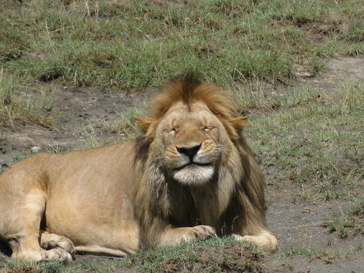 Прикольные картинки львов с надписями