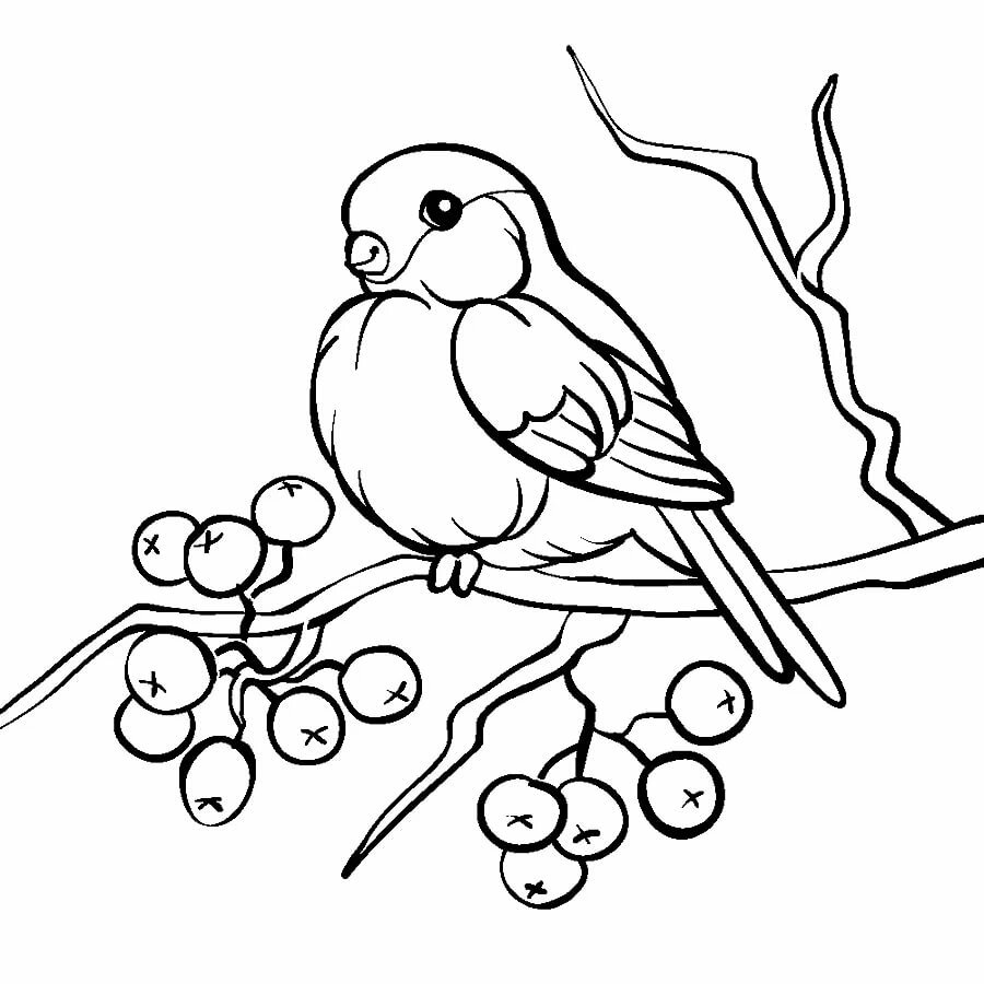 рисунки карандашом снегирь на ветке бурундук