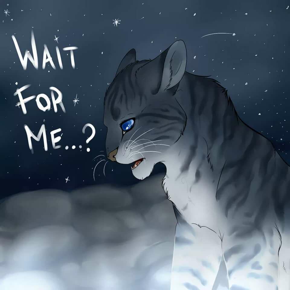 Классные картинки котов воителей грустные, театр