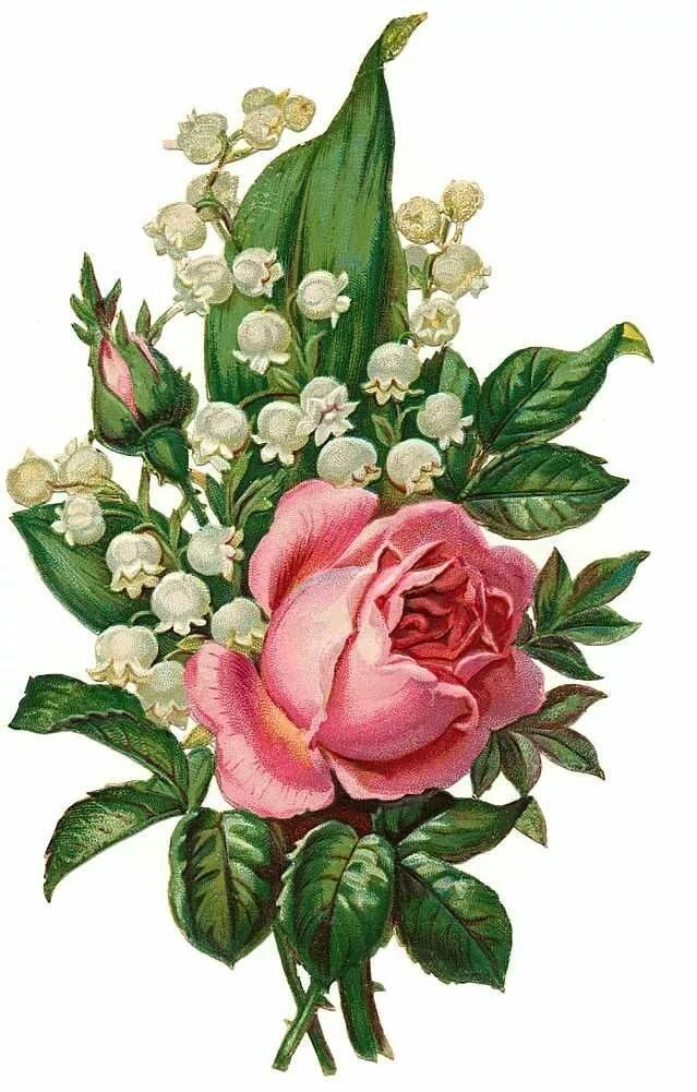 Открытки с рисунком розы