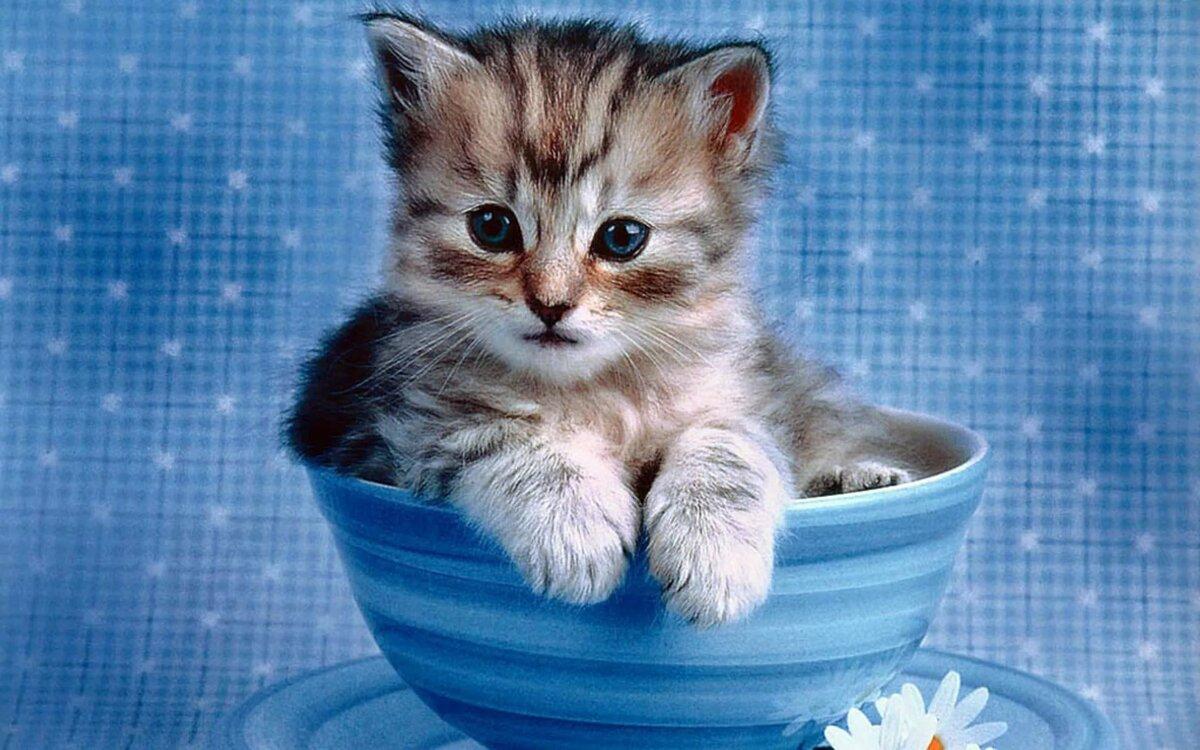 Открытки смешные котята