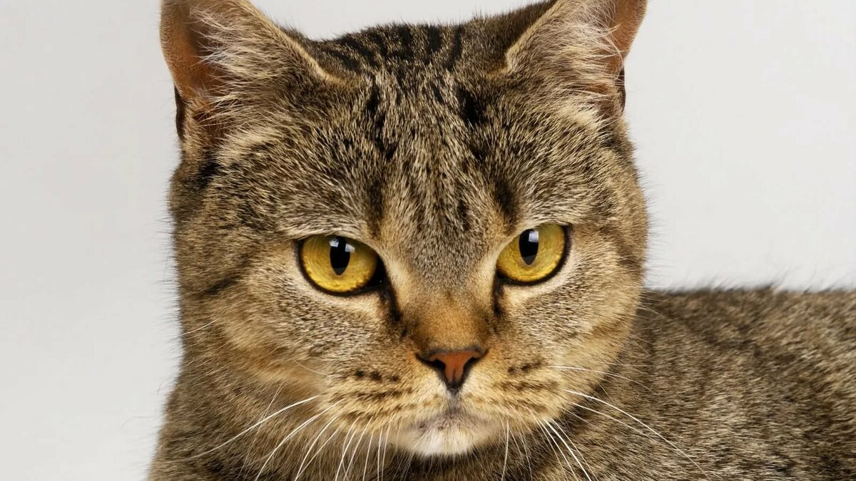 День, коты картинки онлайн