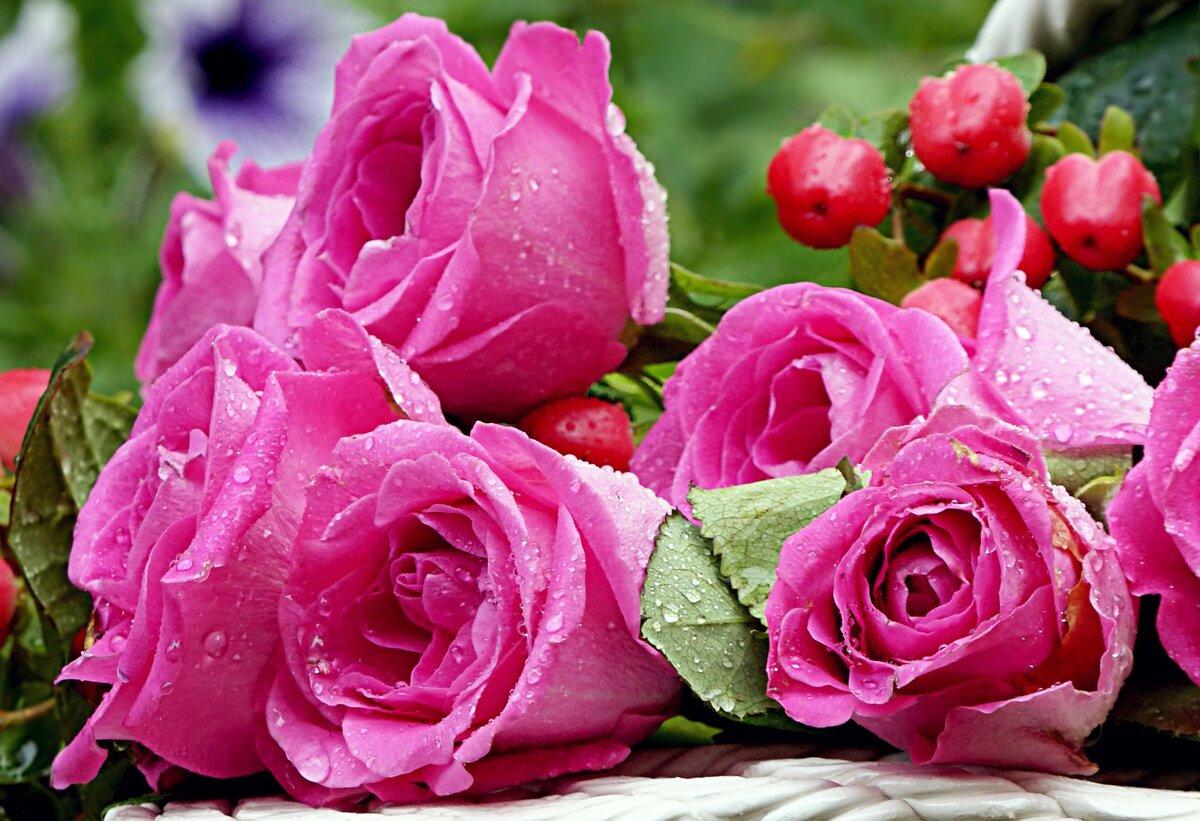 промойте открытки чудесные розы сможете