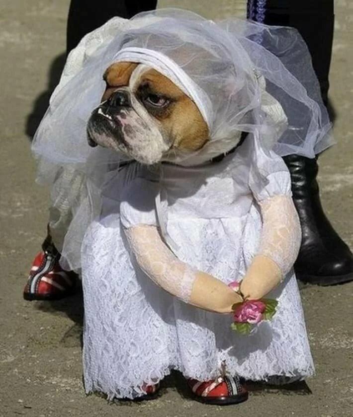 Поздравление имени, смешные картинки в свадебном платье