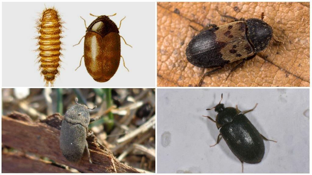 какие есть жучки жуки картинка настоящее