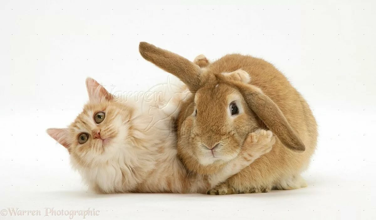 Зайки и кошки картинки