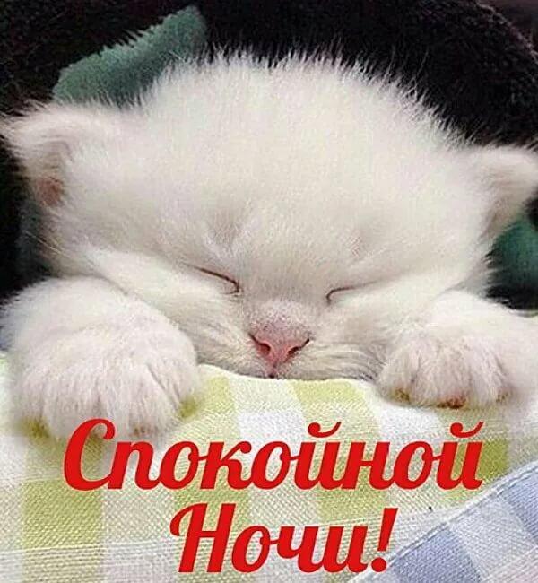 Спокойной ночи красавица картинки, поздравлением