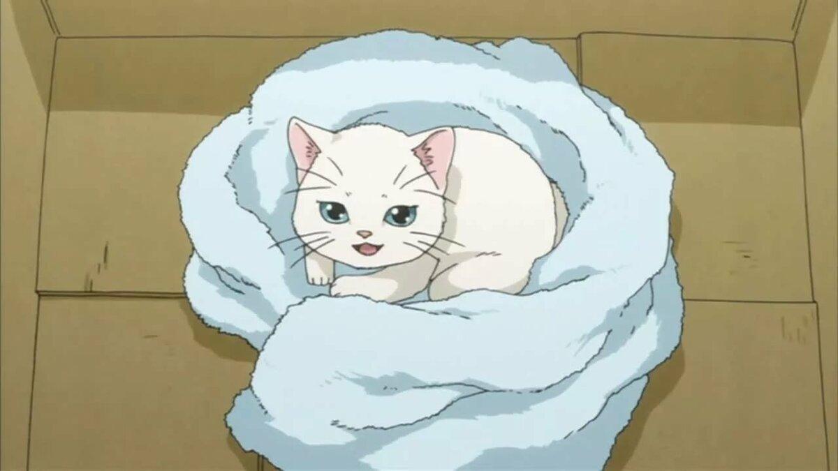 Картинки аниме котята гиф